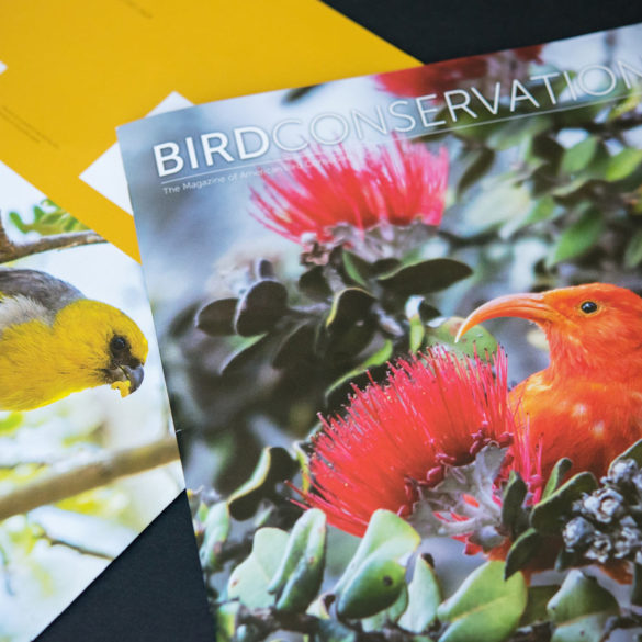 Bird Conservation (Iiwi, Palila)